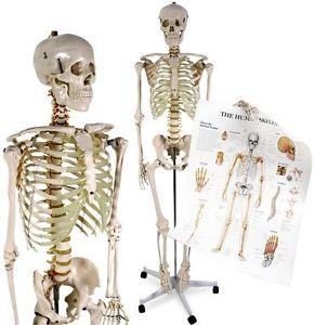Organe und Strukturen
