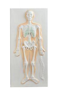 Anatomische Wandplatte 3D: Skelett ST-ATM 144