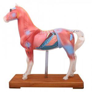 Akupunkturmodell Pferd ST-ATM128
