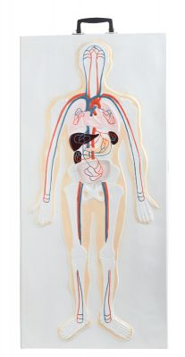 Anatomisch model wandplaat; zenuwstelsel 3D ST-ATM140