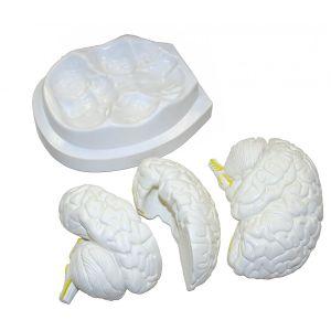 Anatomisches Modell des menschlichen Gehirns ST-ATM 56